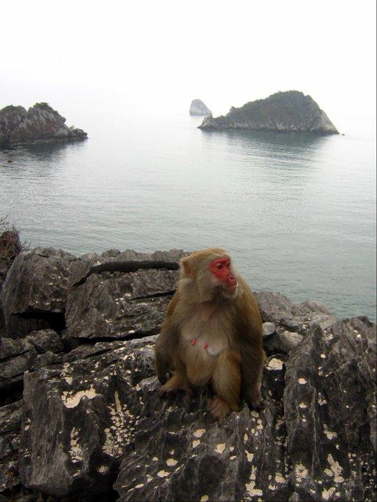 The Monkey Queen